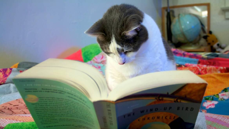 Comment obtenir des avis sur un livre autoédité ?